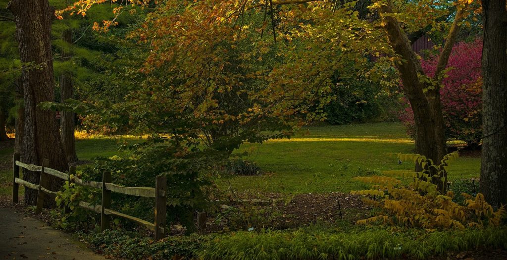 Autumn in Falls Church Virginia | Goodwill Car Donations