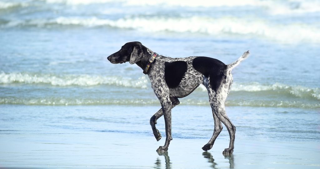 Beach in Irmo South Carolina | Goodwill Car Donations