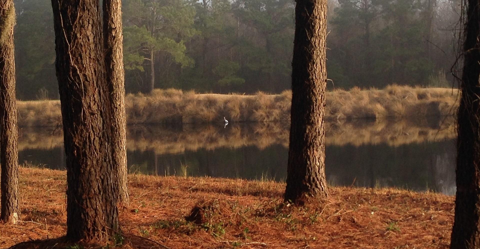 Nature in Carolina Forest - GoodwillCarDonation.org
