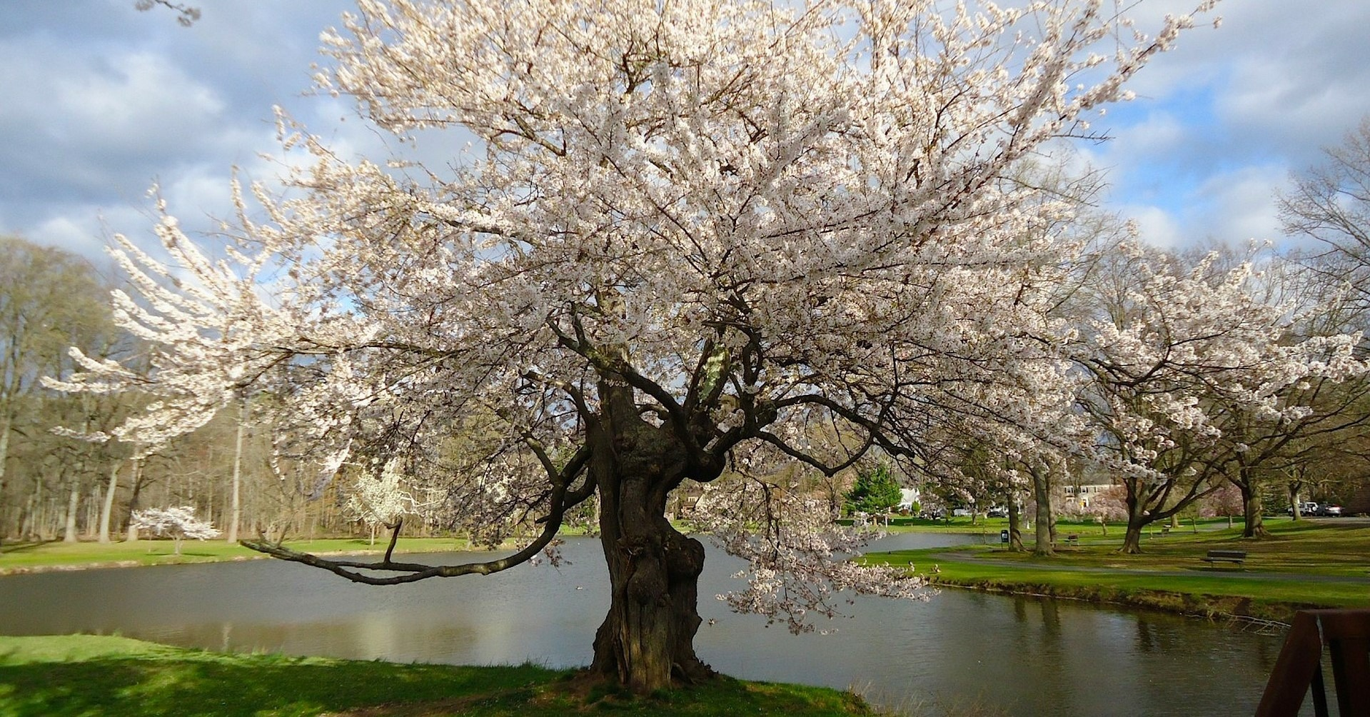 Spring Season in Cherry Hill, New Jersey - GoodwillCarDonation.org