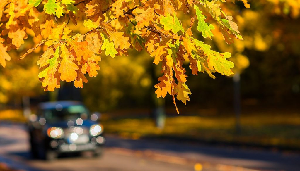 Autumn in Johns Island, South Carolina | Goodwill Car Donations