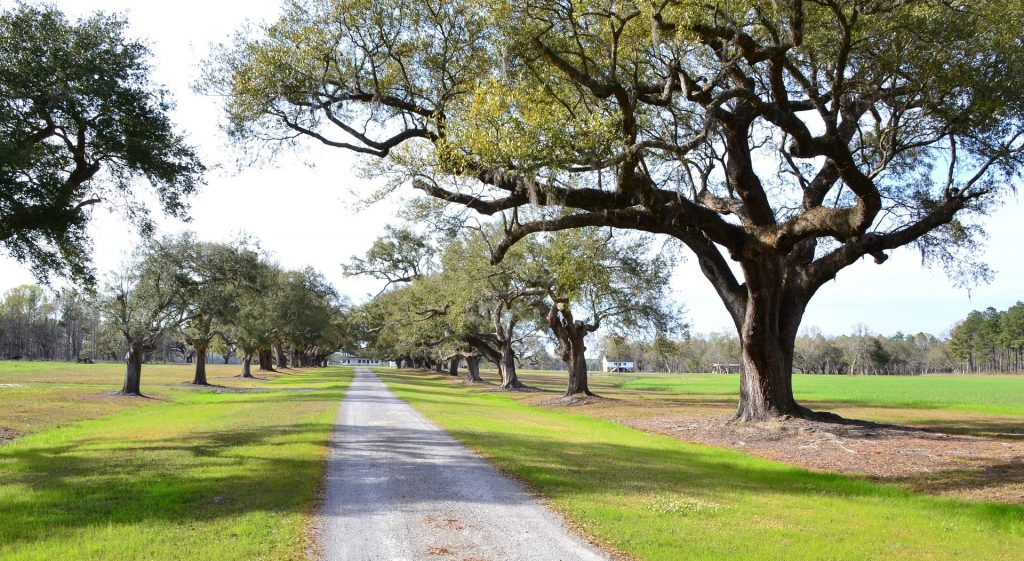 Oak Trees in Greenwood, South Carolina | Goodwill Car Donations