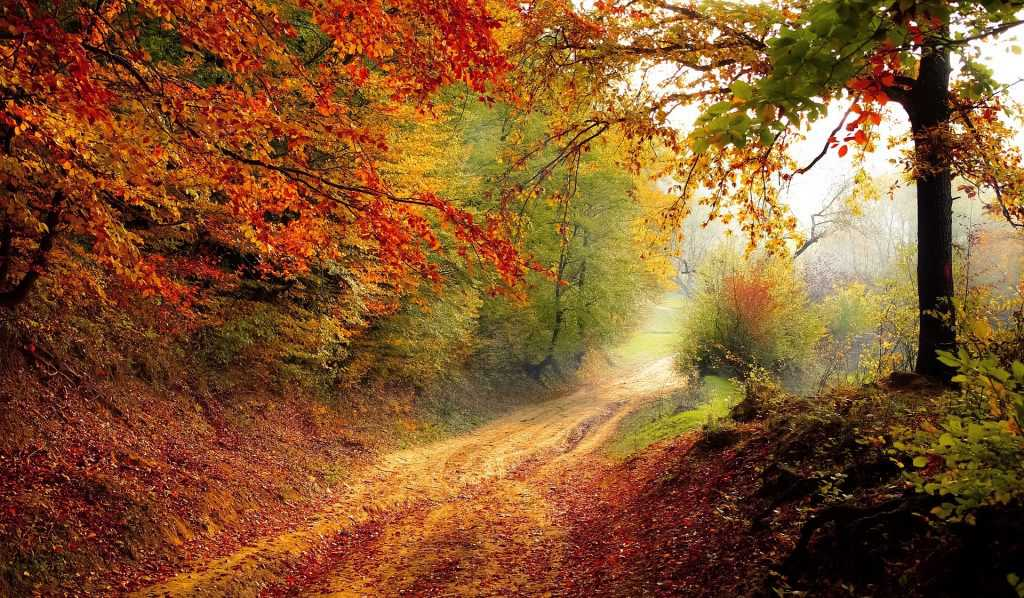 Trees on Autumn Season   Goodwill Car Donations