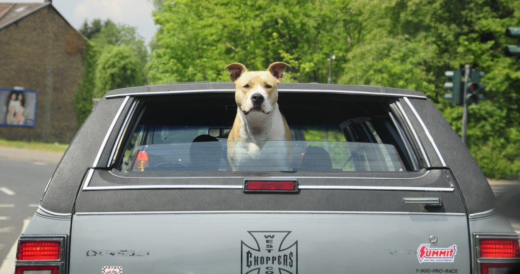 Dog in an Old Car in Chambersburg, Pennsylvania | Goodwill Car Donations