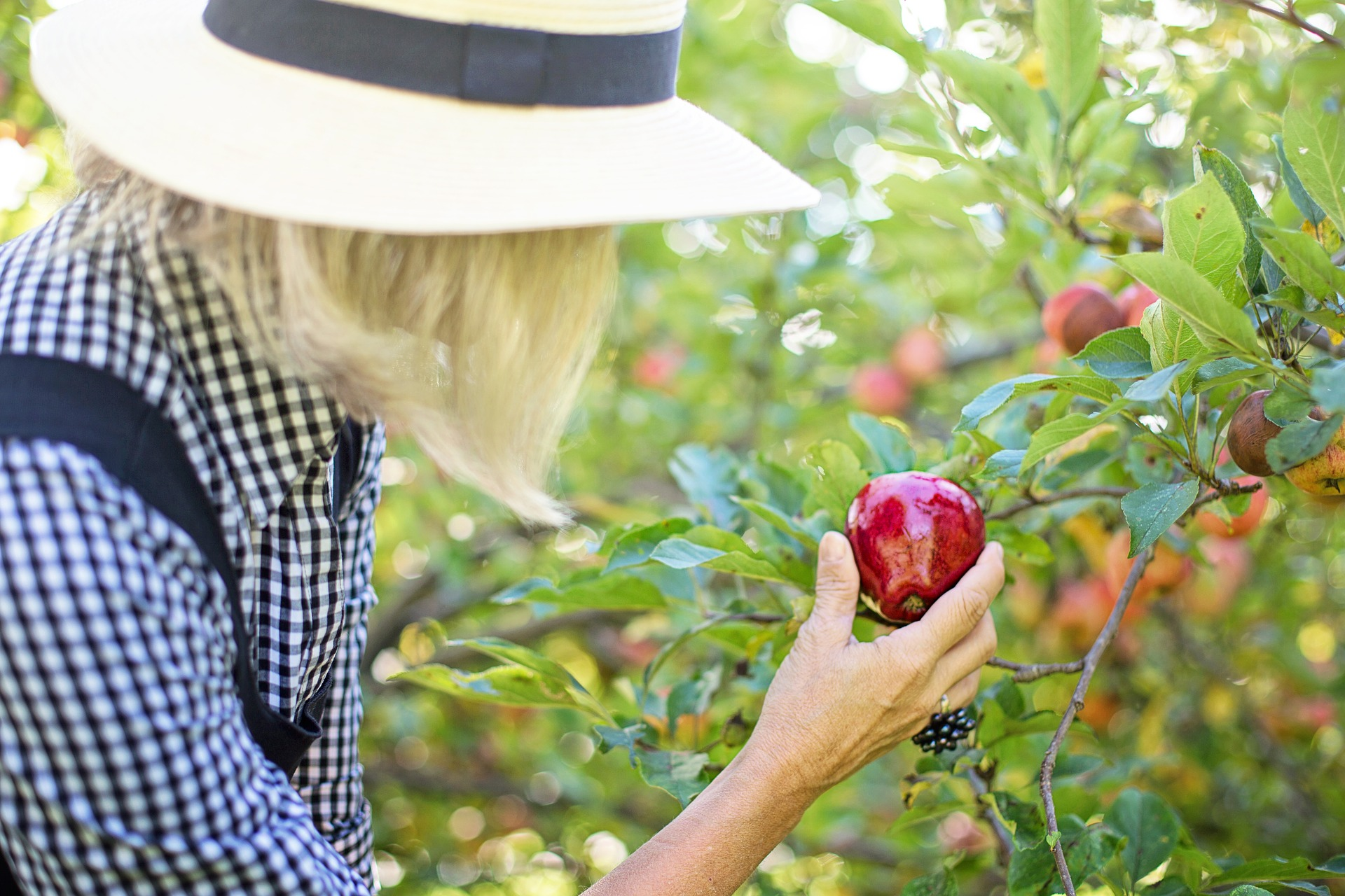 1af56adef Fall Fruit Picking Guide | Goodwill Car Donations