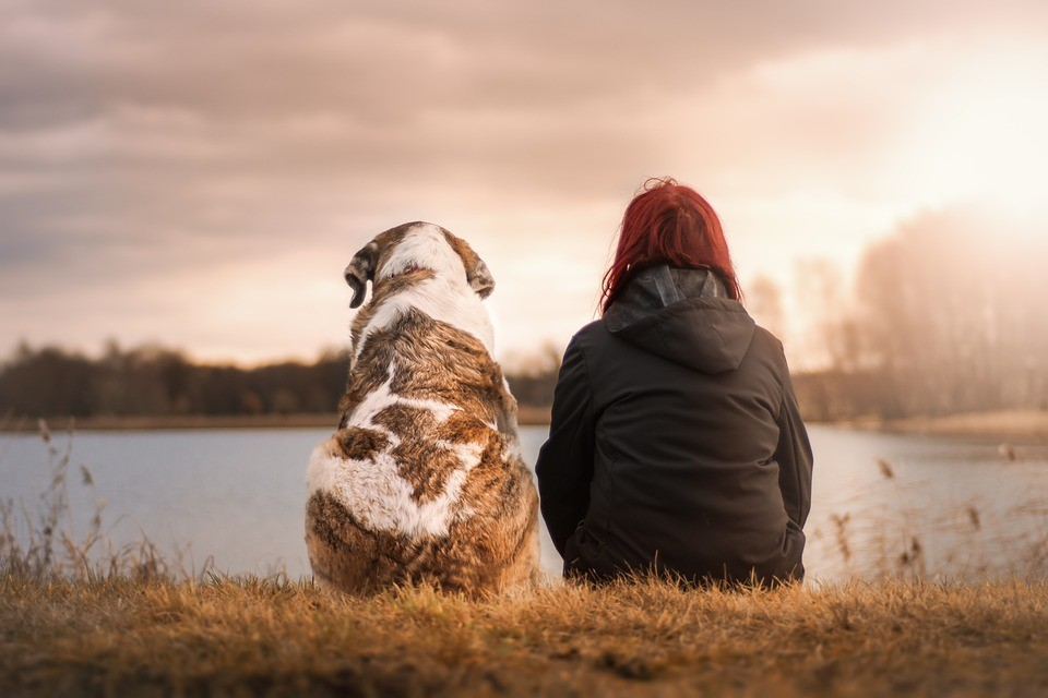 Dog and Owner watching the River Sunset | Goodwill Car Donations