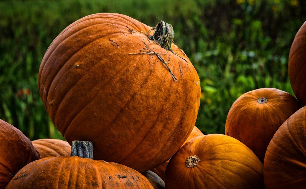 Perfect Pumpkins for Pumpking Picking Season | Goodwill Car Donations