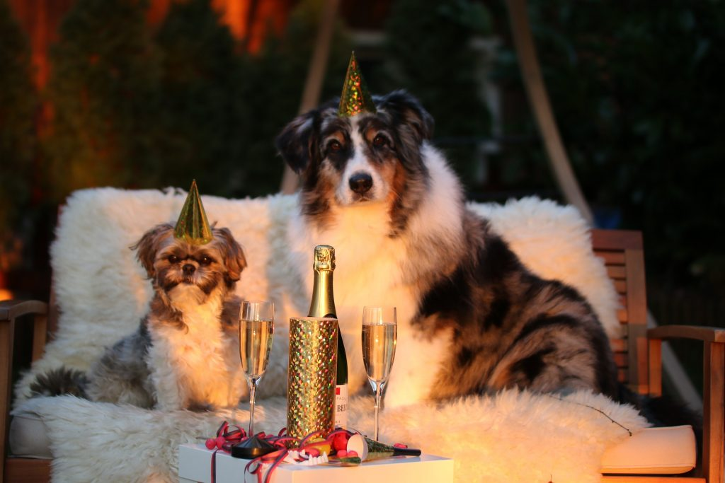 Lovely Pets on New Year's Eve | Goodwill Car Donation