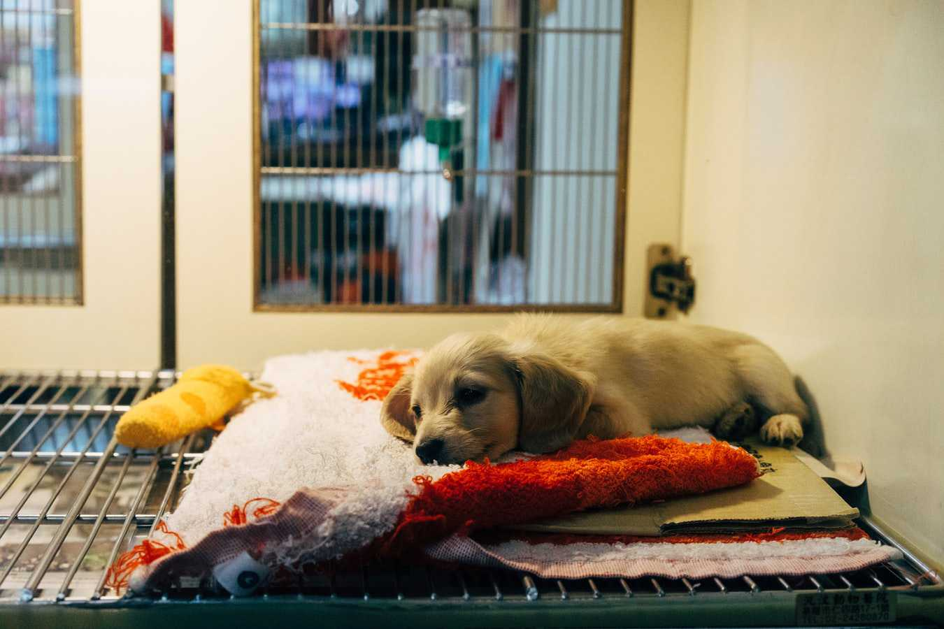 Puppy in a Shelter | Goodwill Car Donations